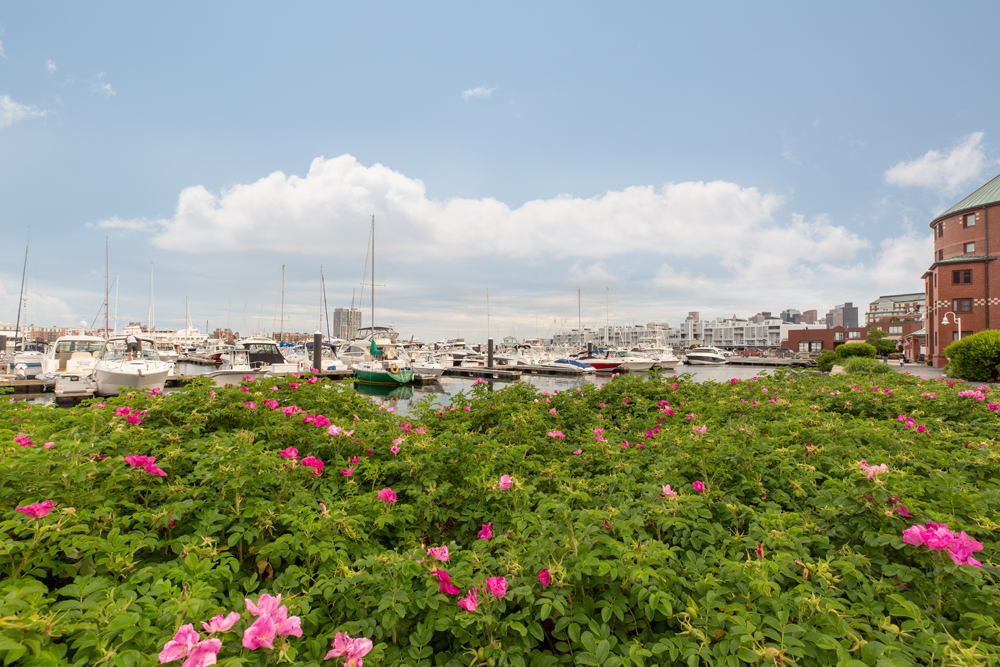 Harbor View At The Navy Yard - Green Bush with Flowers